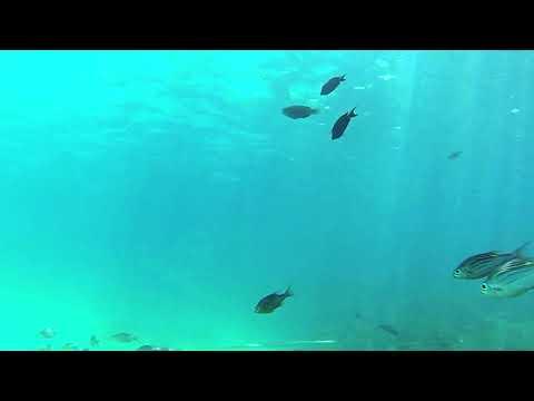 Blue Bay Marine Park
