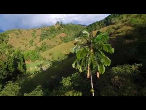 Flying over Cocora Valley
