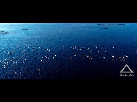 Magnificent Delta of Evros