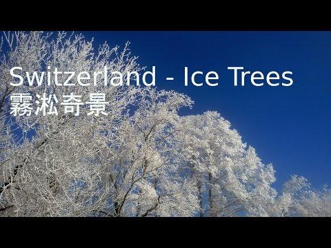 Switzerland Ice Trees