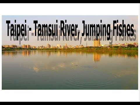 Tamsui River Jumping Fishes